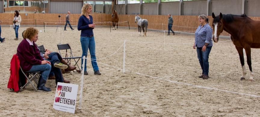 Talent- en leiderschapsontwikkeling in de paardenbak