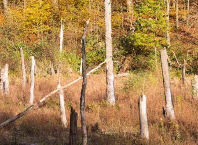 Richting een economie die ecosystemen herstelt