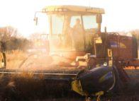 Perfect storm vraagt om agrarische innovatie