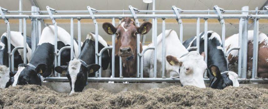 Dierenwelzijn draagt bij aan fosfaatreductie