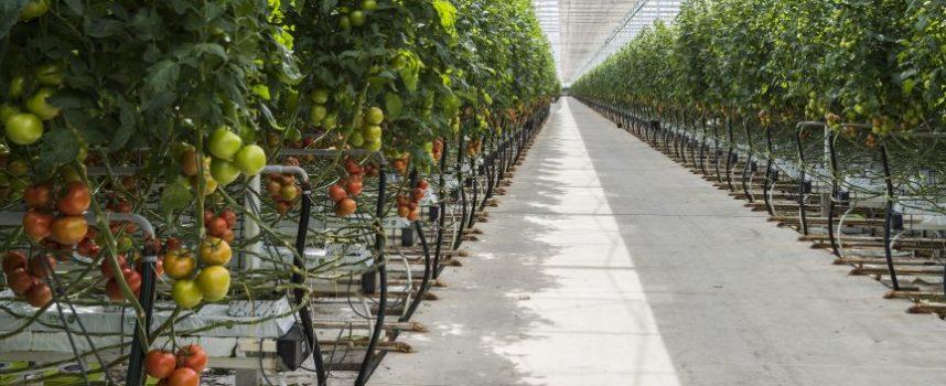 Nieuwe onderzoekskas in Riyad bevordert waterbesparing