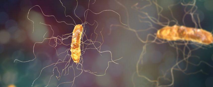 Antimicrobiële resistentie nog steeds een groot probleem