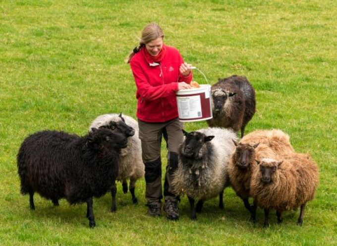 Vrouw stabiele factor op boerderij