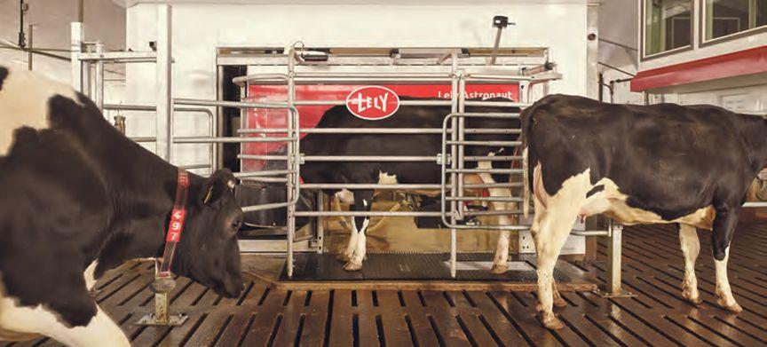 Gezond melkvee en rendement dankzij robotica