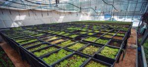 CO2-emissie glastuinbouw in 2017 beperkt gestegen