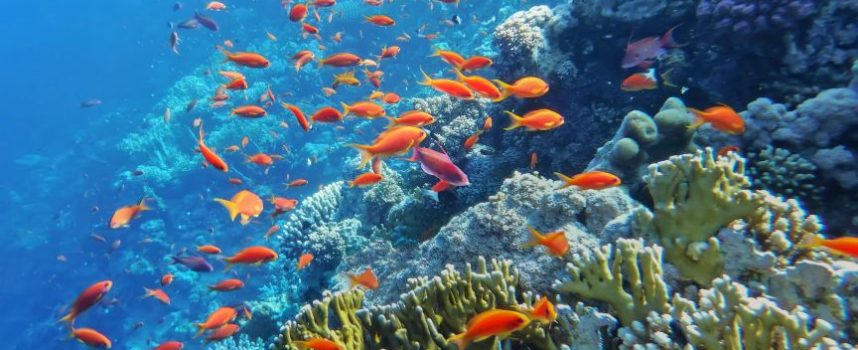 Riffen herstellen met kunstmatig koraal