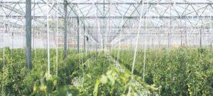 Duurzame invloed op een complex voedselsysteem