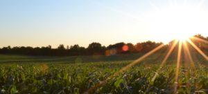 Veranderende agro-sector: een man een vogel, een boer een gans